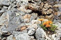 Blumen im Felsen Lizenzfreies Stockbild