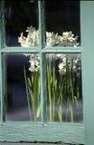 Blumen im Fenster Stockbild