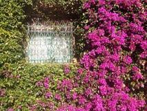 Blumen im Fenster Stockbilder