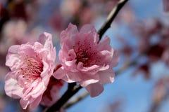 Blumen im Frühjahr Stockfoto