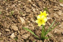 Blumen im Frühjahr Lizenzfreies Stockfoto