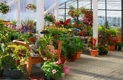 Blumen im Garten. Lizenzfreies Stockfoto