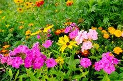 Blumen im Garten Stockbild