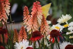 Blumen im Garten Stockfoto
