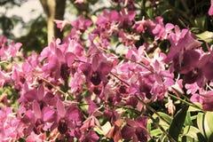 Blumen im Garten Lizenzfreie Stockbilder