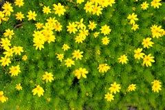 Blumen im Garten Stockfotos