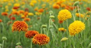 Blumen im Garten stock video