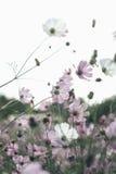 Blumen im Garten Lizenzfreies Stockfoto