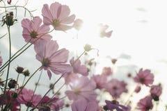Blumen im Garten Stockbilder