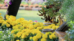 Blumen im Garten, HD-vdo stock footage