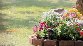 Blumen im Garten, HD-vdo stock video