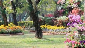 Blumen im Garten, HD-vdo stock video footage