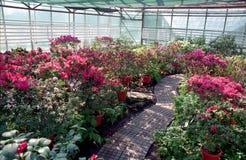 Blumen im Gewächshaus lizenzfreie stockfotos