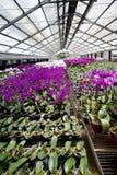 Blumen im Gewächshaus Lizenzfreies Stockfoto