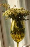 Blumen im Glas Lizenzfreies Stockfoto
