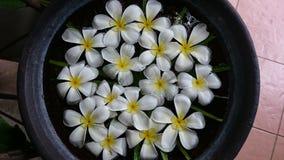 Blumen im Glas Stockfotos