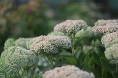Blumen im Grün Lizenzfreies Stockfoto