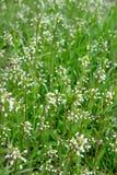 Blumen im Gras Lizenzfreies Stockfoto