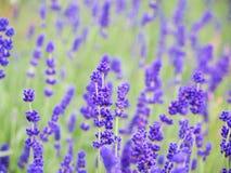 Blumen im Holz Stockfotografie