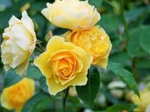 Blumen im Holz Lizenzfreie Stockbilder