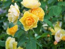 Blumen im Holz Lizenzfreies Stockbild