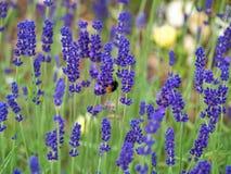 Blumen im Holz Lizenzfreies Stockfoto