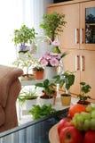 Blumen im Innenraum Lizenzfreie Stockfotos