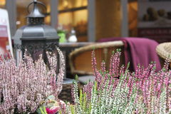 Blumen im Innenraum Lizenzfreie Stockfotografie