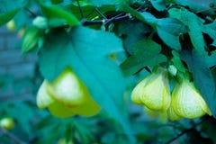 Blumen im kalten lizenzfreie stockbilder