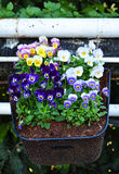 Blumen im Korb Lizenzfreie Stockfotografie