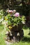 Blumen im Korb Stockfotos
