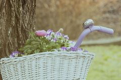 Blumen im Korb im Frühjahr Stockfoto