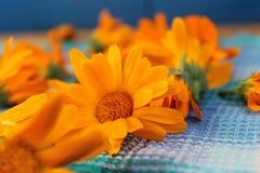 Blumen im Land lizenzfreie stockbilder