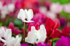 Blumen im Licht lizenzfreie stockfotos