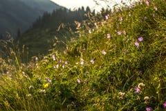 Blumen im Licht der Sonne Stockbild