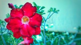 Blumen im Makro lizenzfreie stockbilder