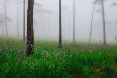 Blumen im Nebel lizenzfreie stockbilder