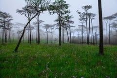 Blumen im Nebel lizenzfreie stockfotos