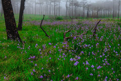 Blumen im Nebel lizenzfreies stockbild