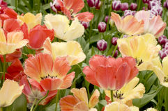 Blumen im Park Stockfotografie