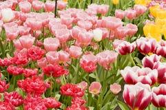Blumen im Park Stockbild