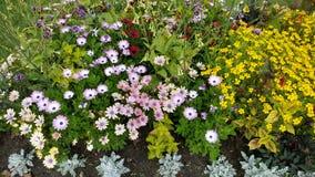 Blumen im Park Stockfotos
