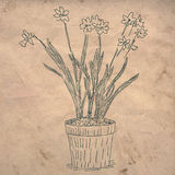 Blumen im Potenziometer Stockfotos