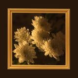 Blumen im Rahmen Stockfotografie