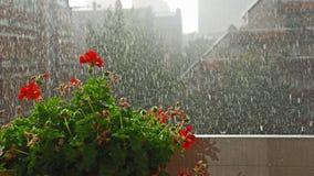 Blumen im Regen Stockfotografie