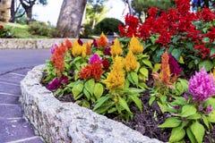 Blumen im schönen, exotischen Garten in Monaco Lizenzfreies Stockbild