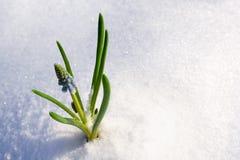 Blumen im Schnee Stockfoto