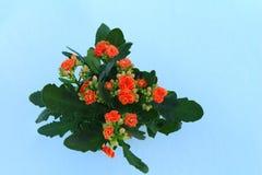Blumen im Schnee Hintergrund - Weiß Lizenzfreie Stockfotos