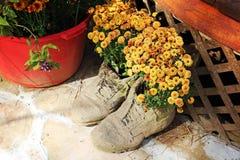 Blumen im Schuh-Topf Stockfoto