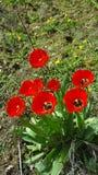 Blumen im Sonnenlicht bei tag. 24, 50 royalty free stock image